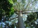 [Australian rain forest]